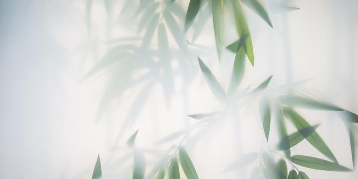 Bambu si ricava la celluloide